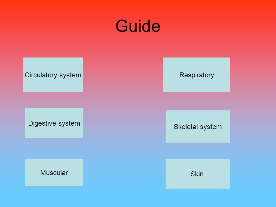 Guide Circulatory system Respiratory Digestive system Skeletal system