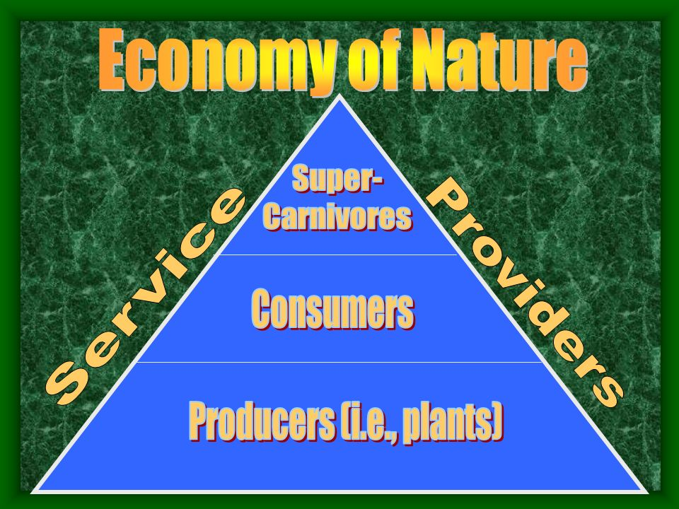 Economy of Nature Super- Carnivores Service Providers Consumers Producers (i.e., plants)