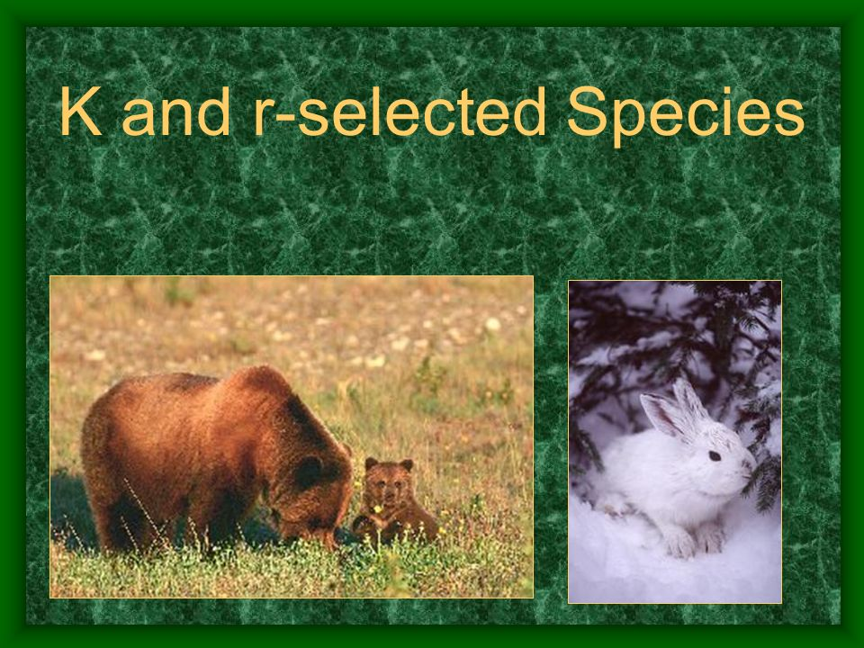 K and r-selected Species