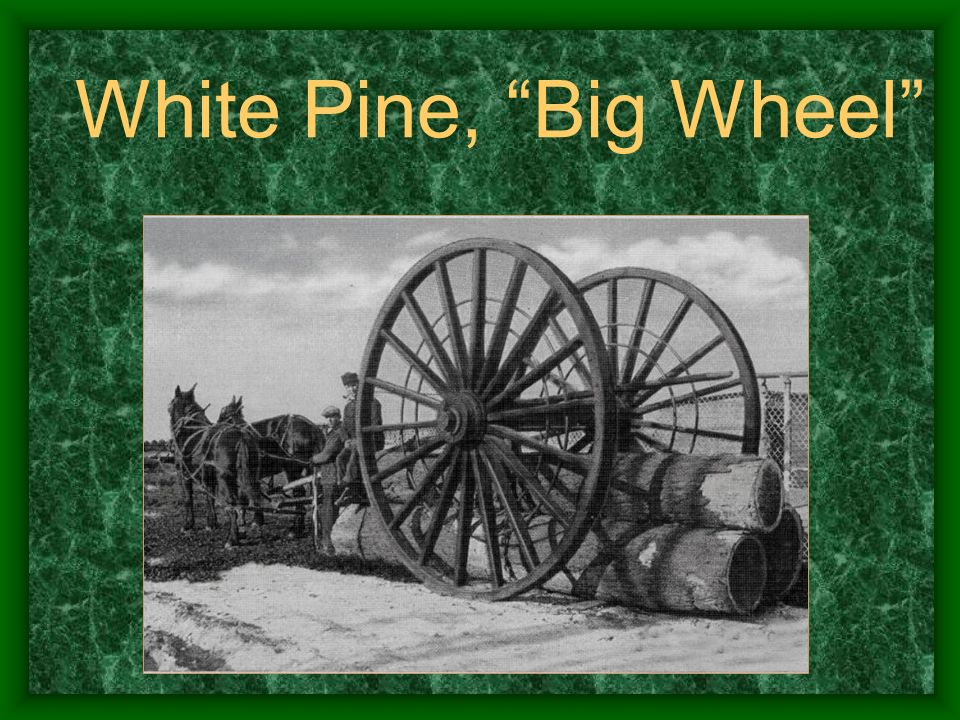 White Pine, Big Wheel