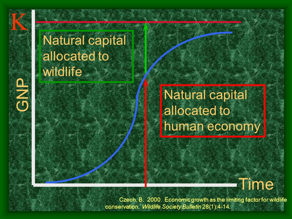K GNP Time Natural capital allocated to wildlife Natural capital