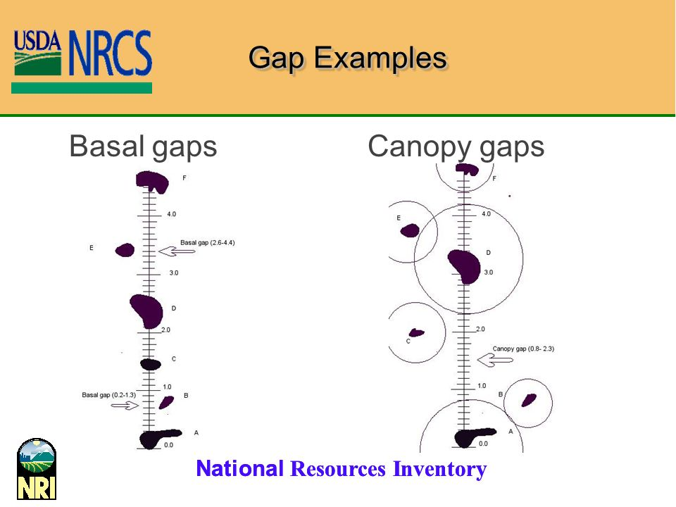 Gap Examples Basal gaps Canopy gaps