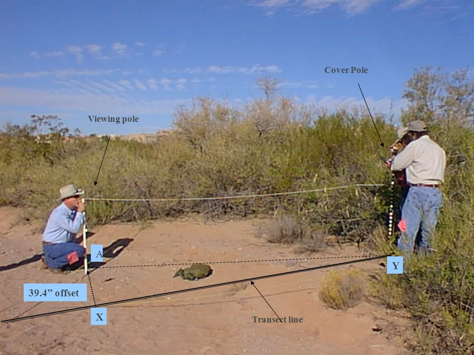 Cover Pole Transect line B Viewing pole A Y 39.4 offset X