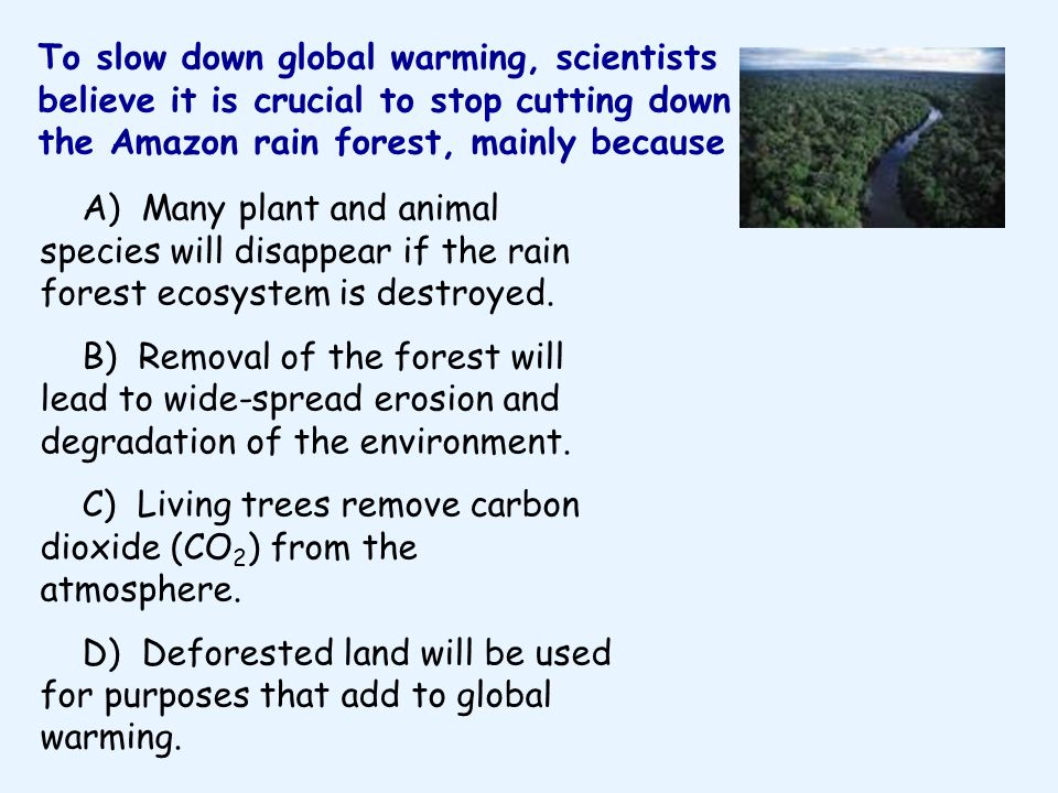 To slow down global warming, scientists believe it is crucial to stop cutting down the Amazon rain forest, mainly because