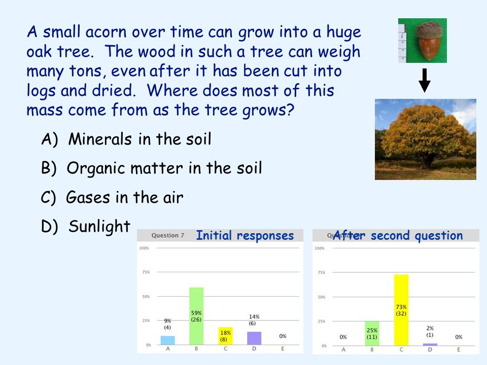 B) Organic matter in the soil C) Gases in the air D) Sunlight