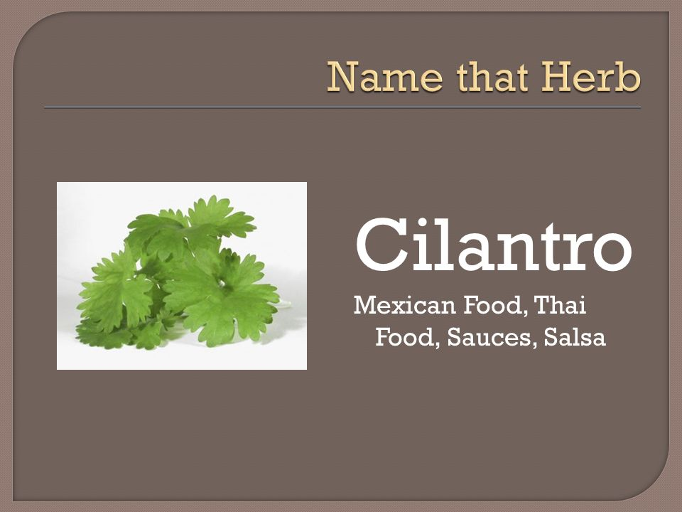 Name that Herb Cilantro Mexican Food, Thai Food, Sauces, Salsa