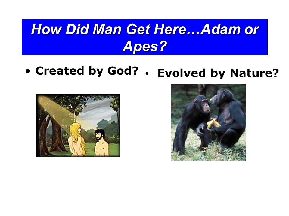 How Did Man Get Here…Adam or Apes