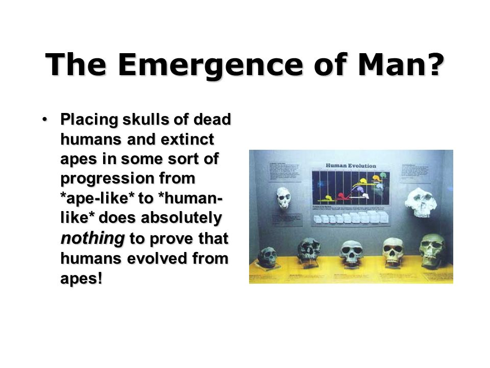 The Emergence of Man
