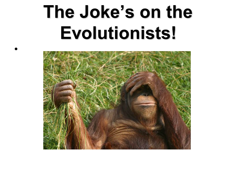 The Joke's on the Evolutionists!