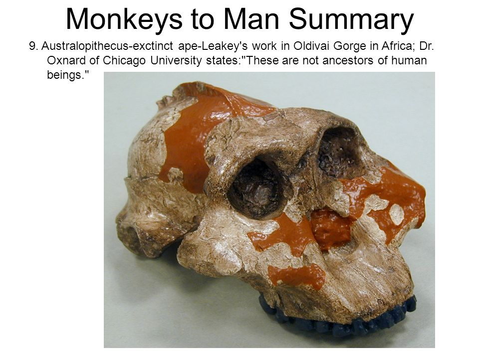 Monkeys to Man Summary