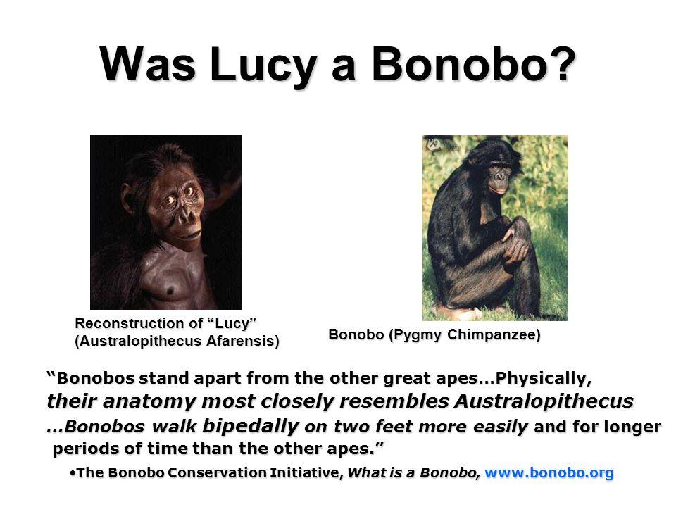 Was Lucy a Bonobo Reconstruction of Lucy (Australopithecus Afarensis) Bonobo (Pygmy Chimpanzee)
