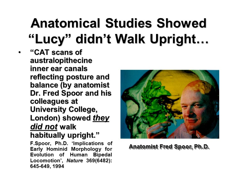 Anatomical Studies Showed Lucy didn't Walk Upright…