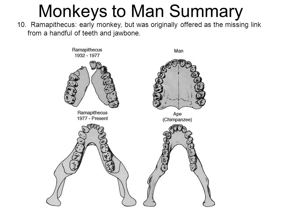 Monkeys to Man Summary 10.