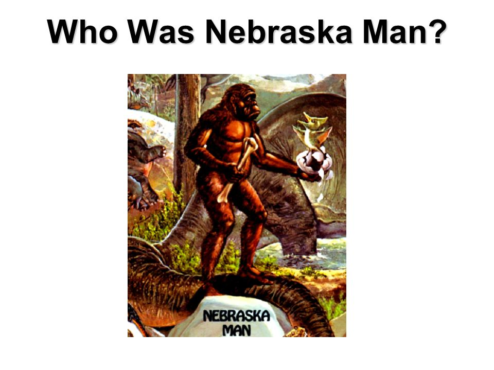 Who Was Nebraska Man