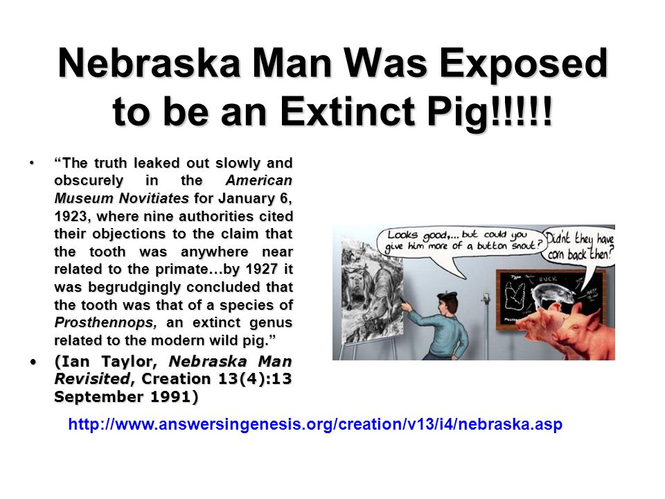 Nebraska Man Was Exposed to be an Extinct Pig!!!!!