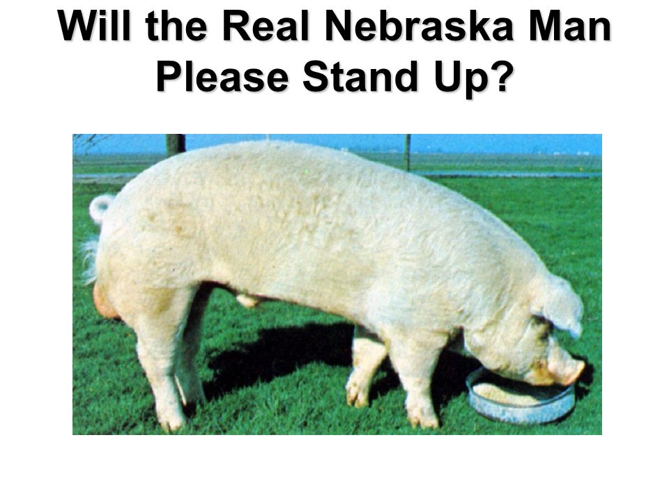 Will the Real Nebraska Man Please Stand Up