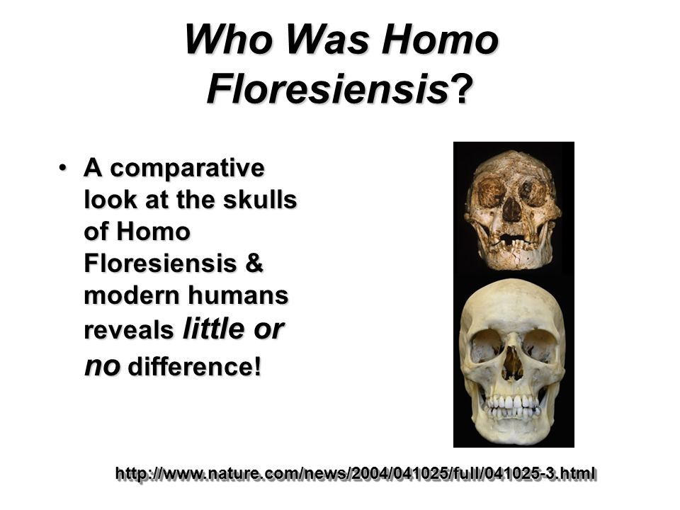 Who Was Homo Floresiensis
