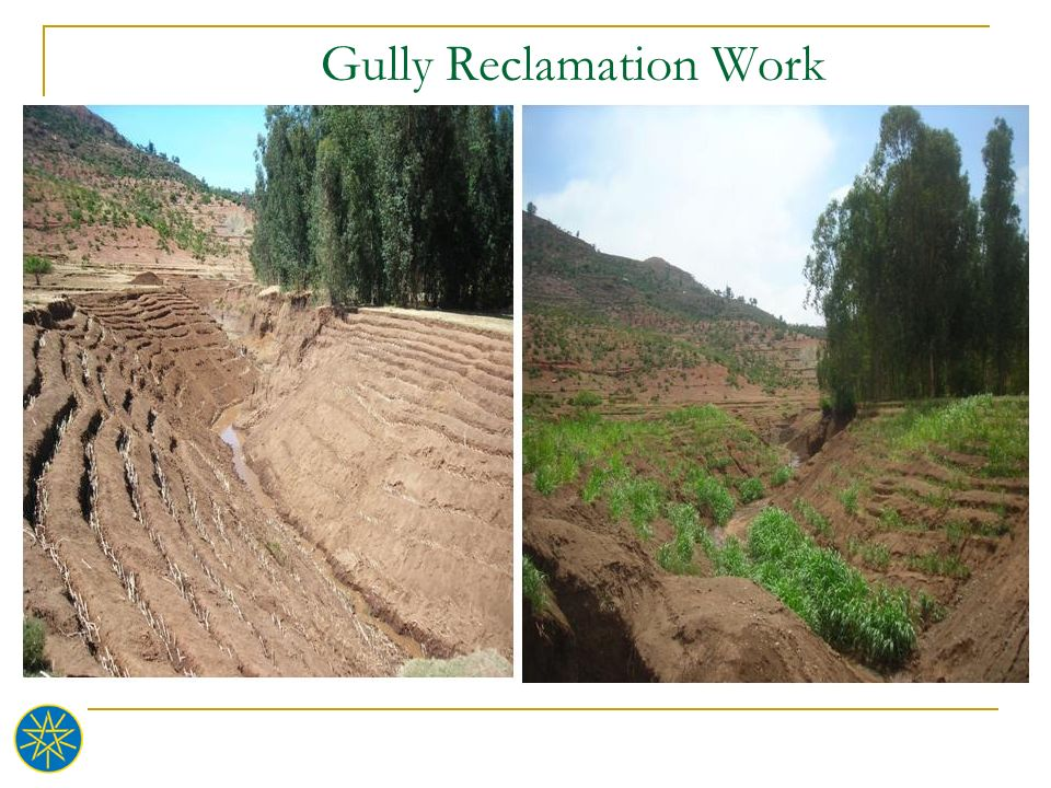 Gully Reclamation Work