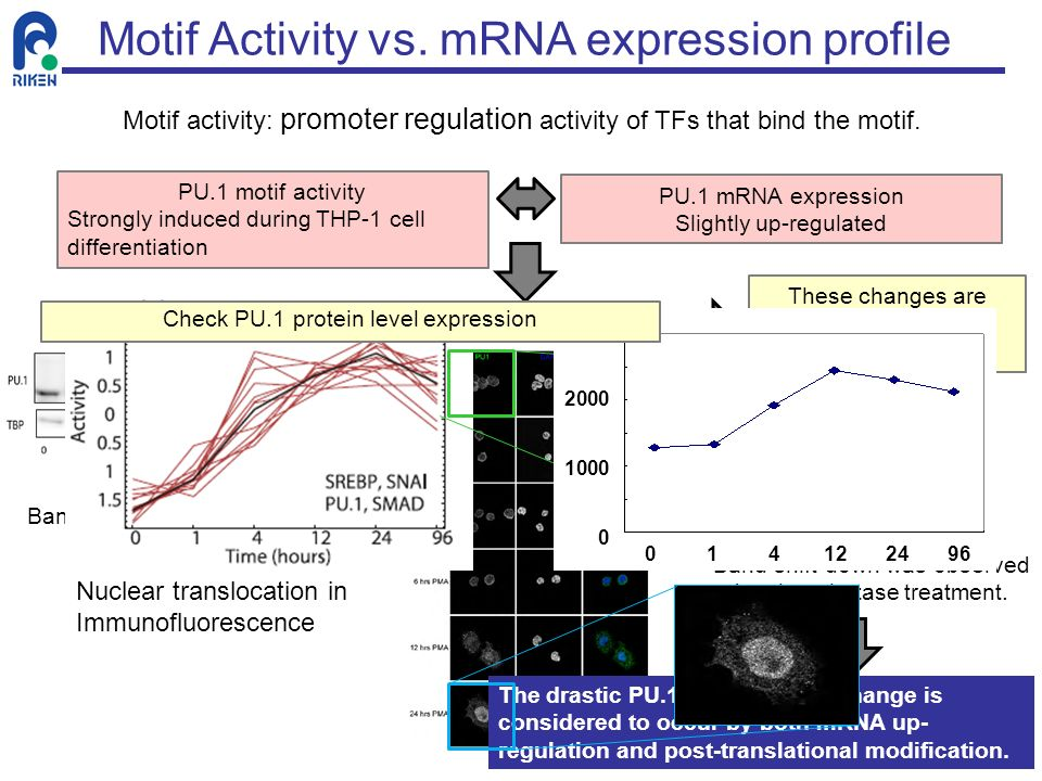 Motif Activity vs. mRNA expression profile