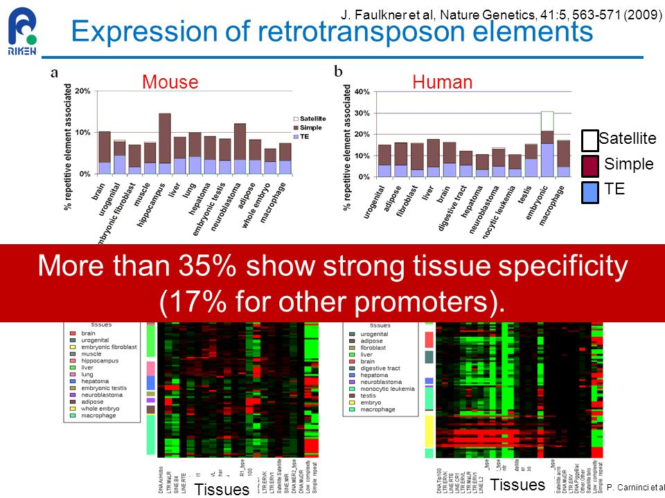 Expression of retrotransposon elements