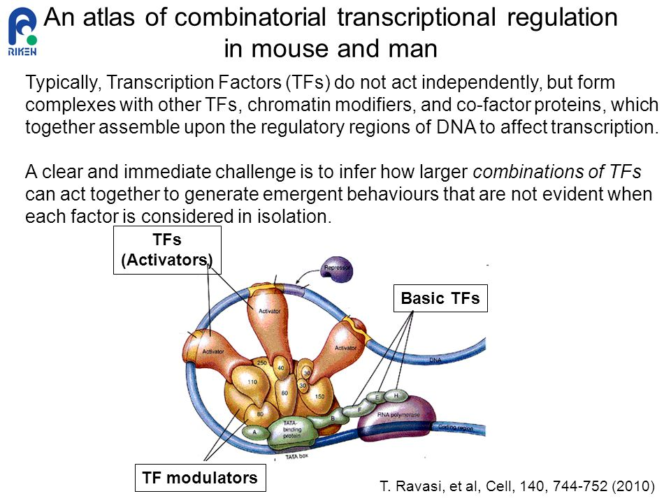 An atlas of combinatorial transcriptional regulation in mouse and man