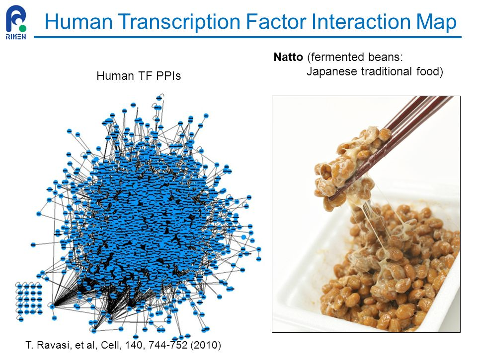 Human Transcription Factor Interaction Map