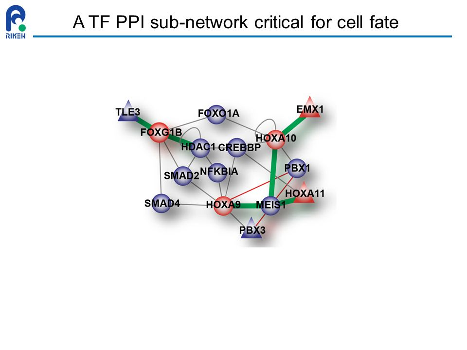 A TF PPI sub-network critical for cell fate