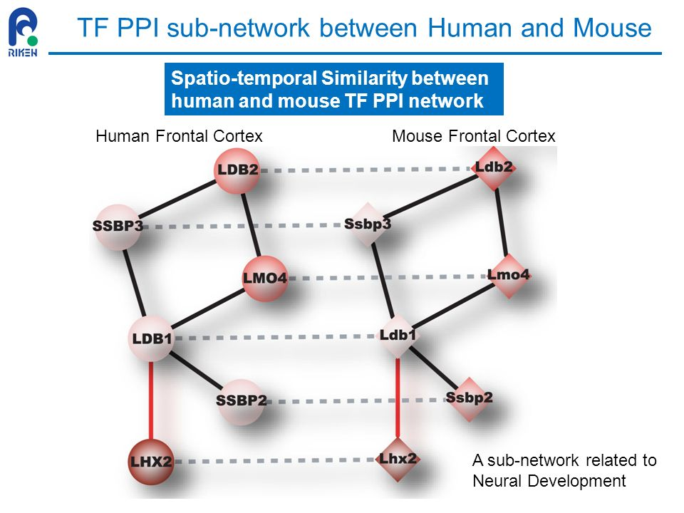 TF PPI sub-network between Human and Mouse