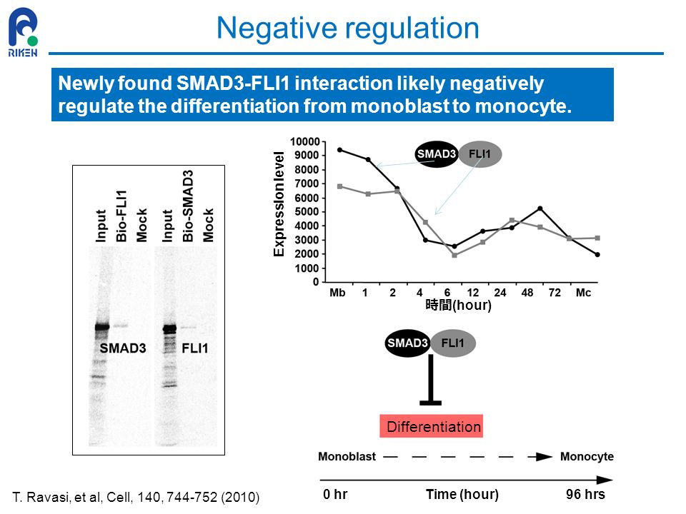 Negative regulation Newly found SMAD3-FLI1 interaction likely negatively regulate the differentiation from monoblast to monocyte.