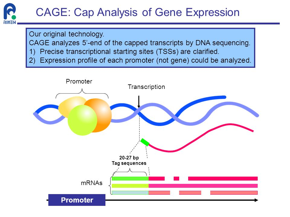 CAGE: Cap Analysis of Gene Expression