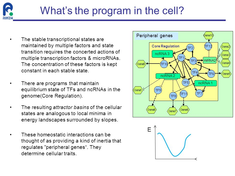 What's the program in the cell
