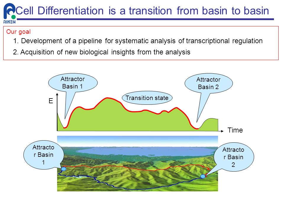 Cell Differentiation is a transition from basin to basin