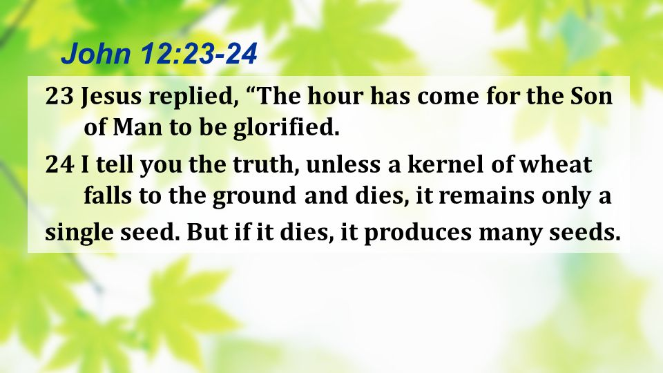 John 12:23-24 23 Jesus replied, The hour has come for the Son of Man to be glorified.