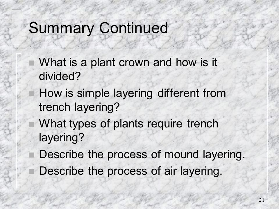 Summary Continued What is a plant crown and how is it divided