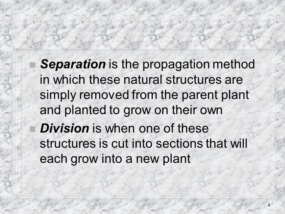 Separation is the propagation method in which these natural structures are simply removed from the parent plant and planted to grow on their own
