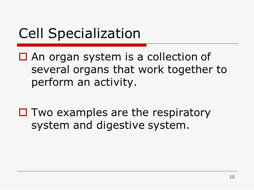 Cell Specialization An organ system is a collection of several organs that work together to perform an activity.