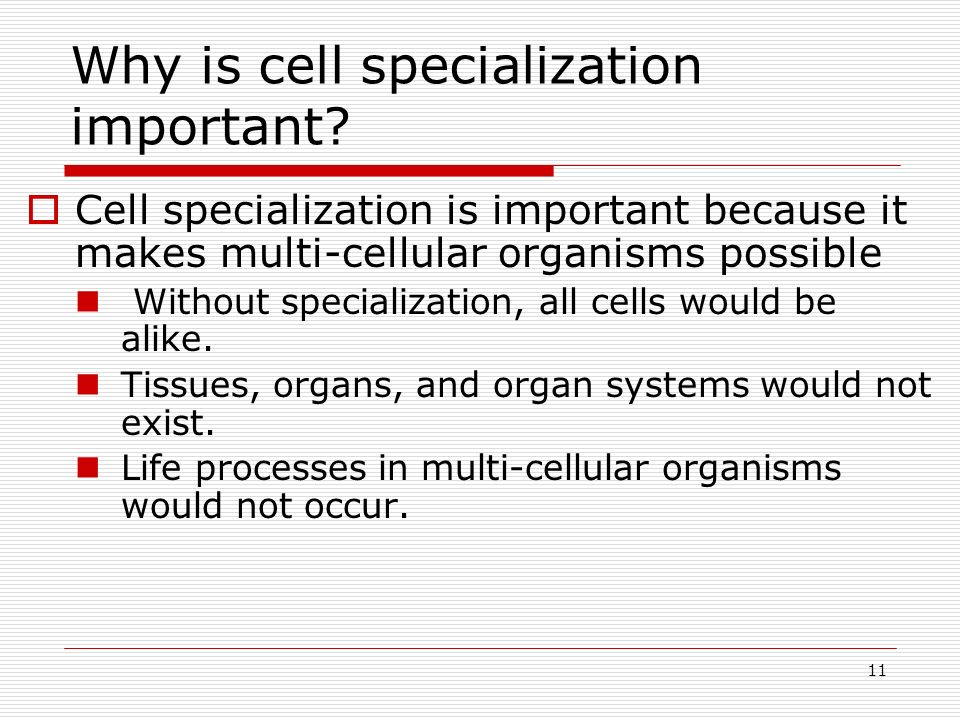 Why is cell specialization important