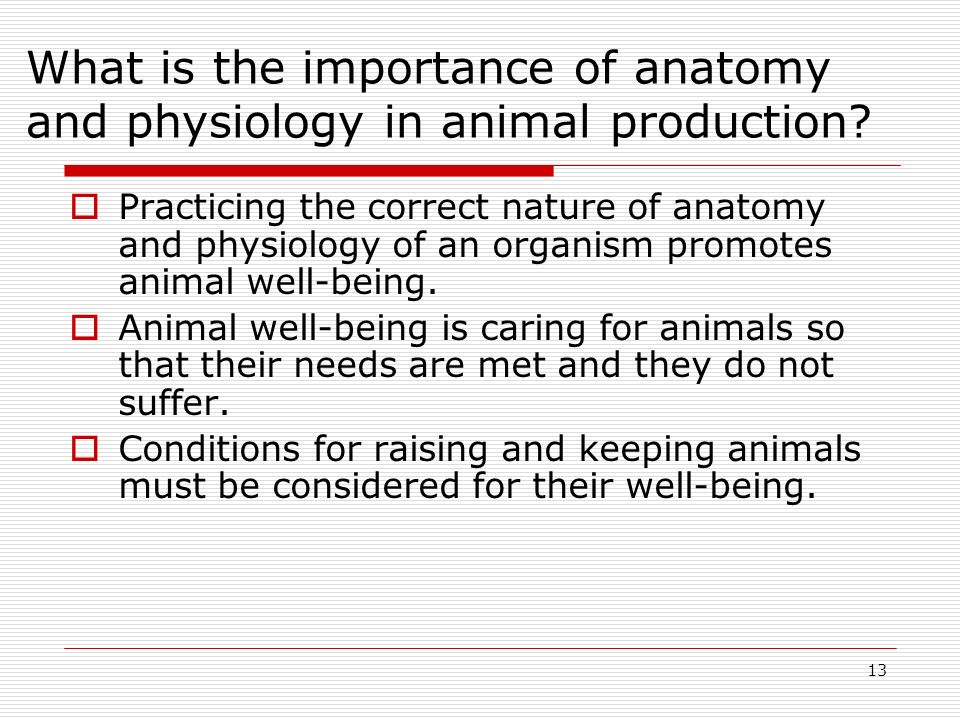 What is the importance of anatomy and physiology in animal production