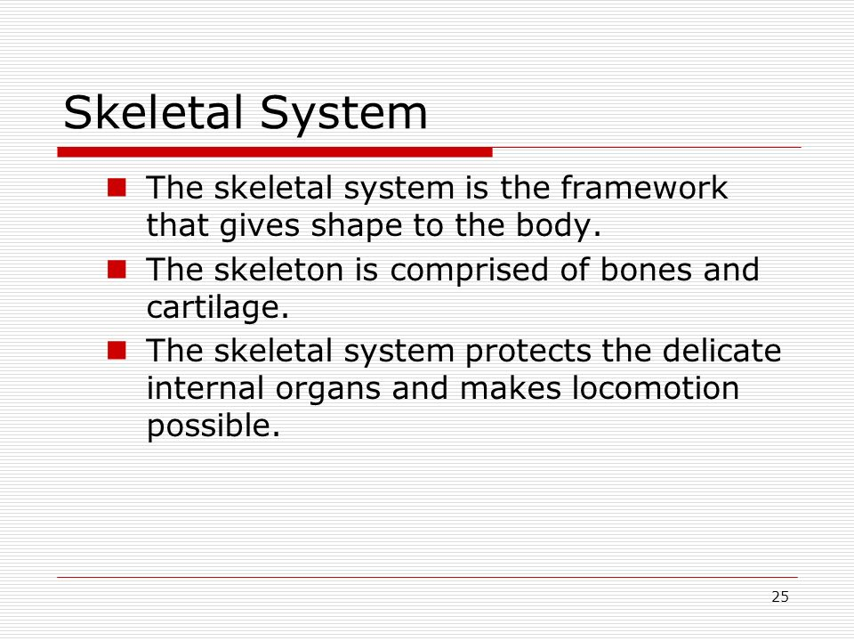 Skeletal System The skeletal system is the framework that gives shape to the body. The skeleton is comprised of bones and cartilage.