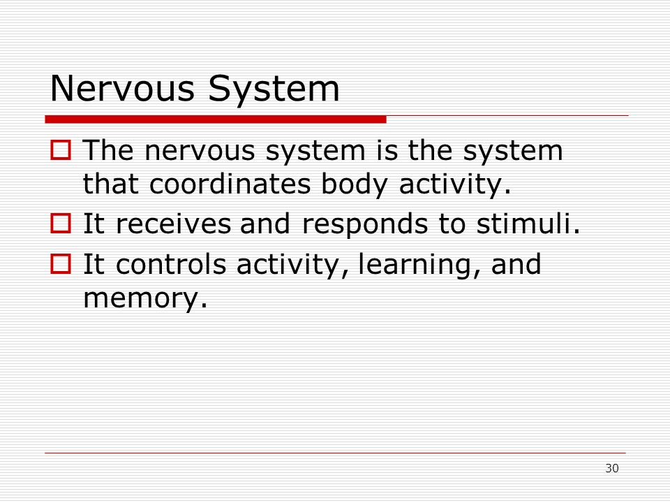 Nervous System The nervous system is the system that coordinates body activity. It receives and responds to stimuli.