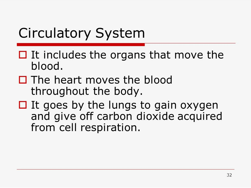 Circulatory System It includes the organs that move the blood.