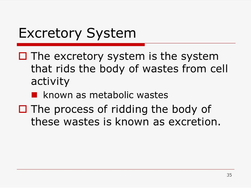 Excretory System The excretory system is the system that rids the body of wastes from cell activity.