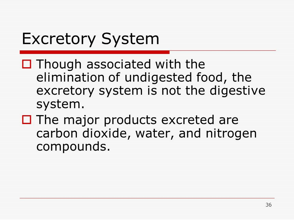 Excretory System Though associated with the elimination of undigested food, the excretory system is not the digestive system.