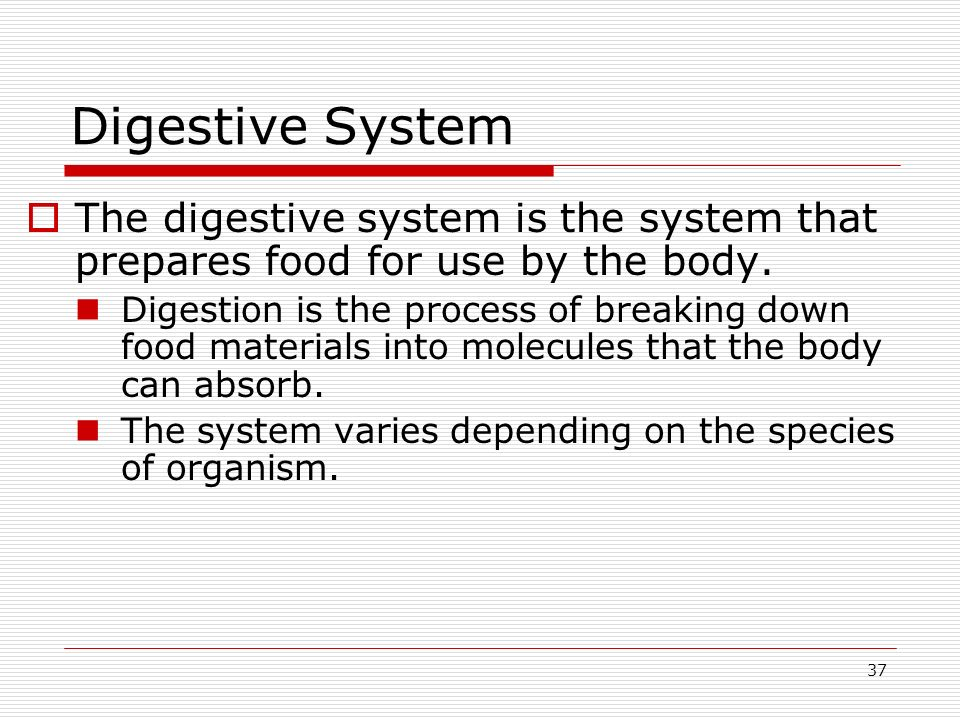 Digestive System The digestive system is the system that prepares food for use by the body.