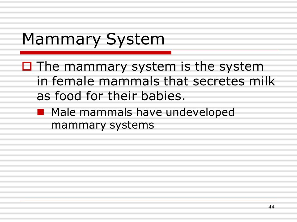 Mammary System The mammary system is the system in female mammals that secretes milk as food for their babies.