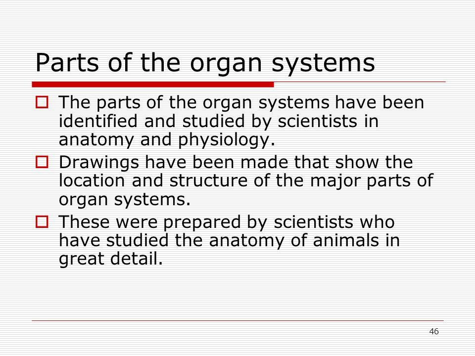 Parts of the organ systems