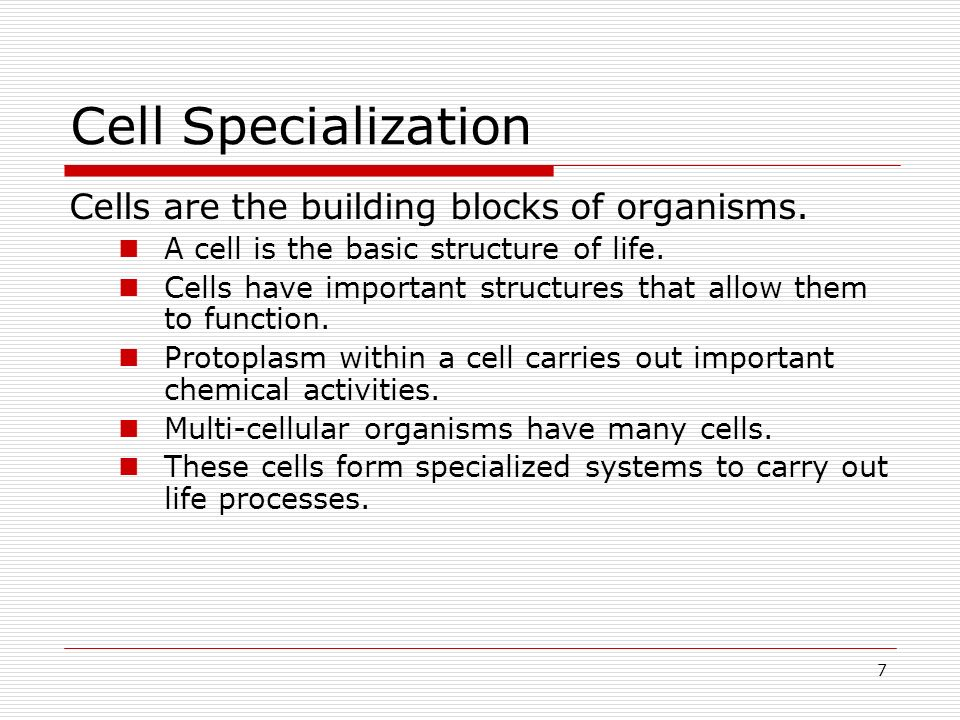 Cell Specialization Cells are the building blocks of organisms.