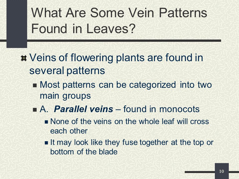 What Are Some Vein Patterns Found in Leaves