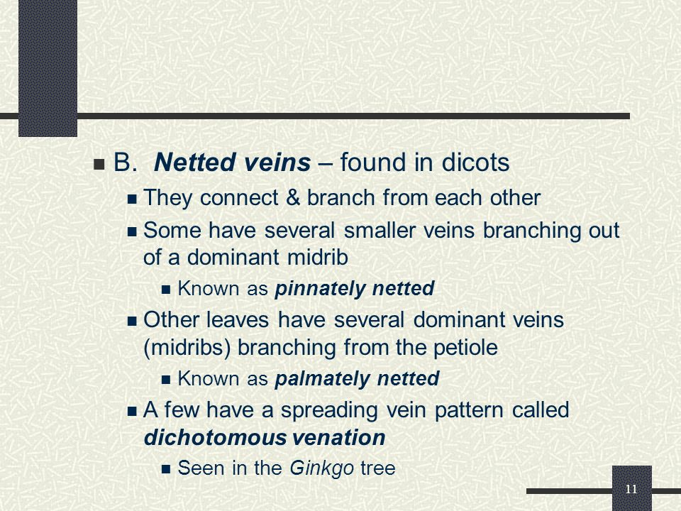 B. Netted veins – found in dicots
