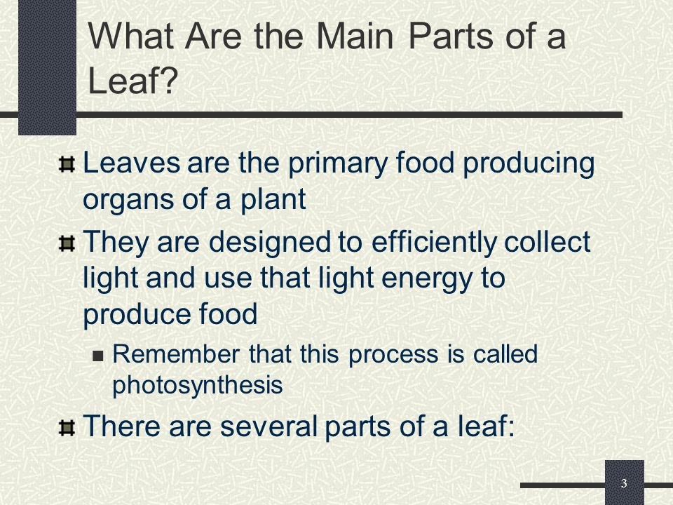 What Are the Main Parts of a Leaf